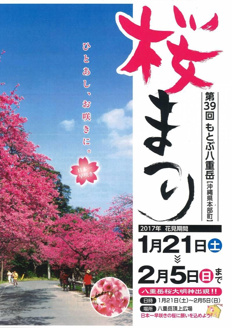 ★もとぶ八重岳桜まつり★