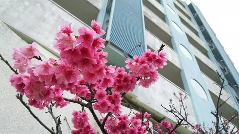 BISE桜
