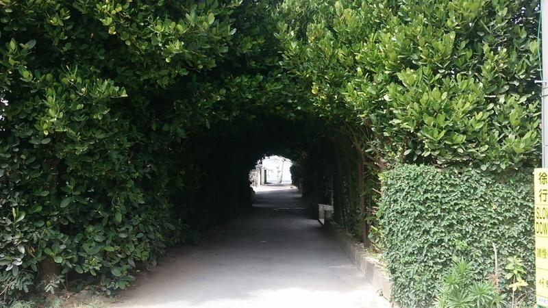 備瀬フクギ並木のトンネルを抜けると・・・