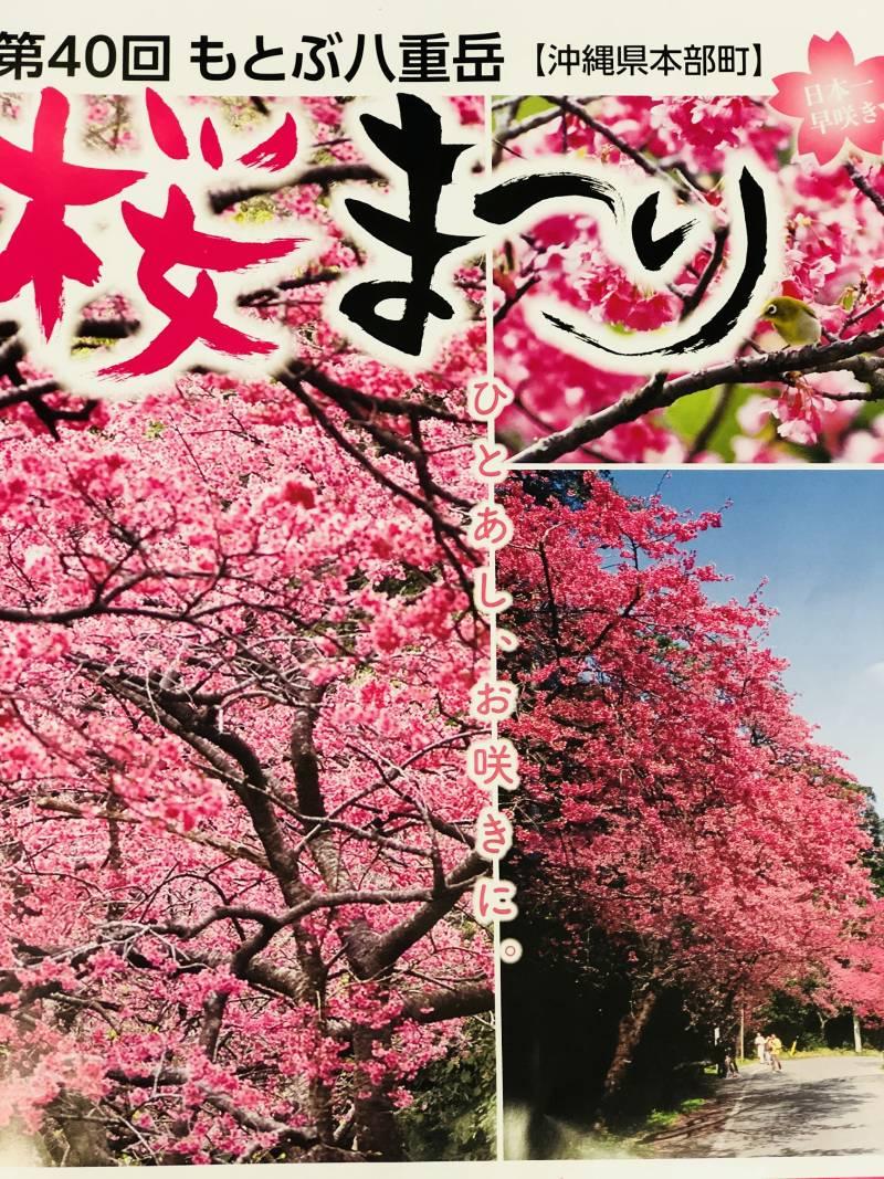 第40回もとぶ八重岳 桜まつり