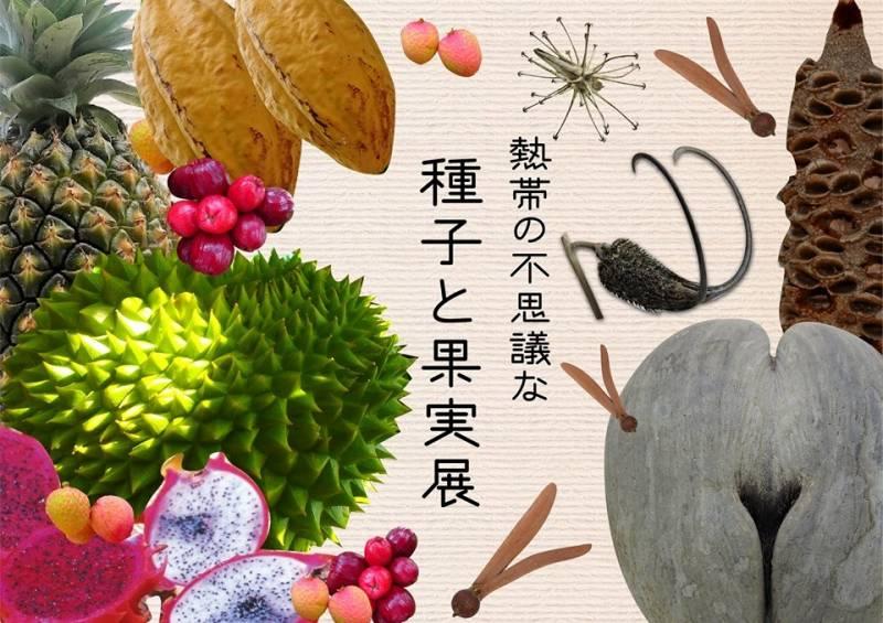 熱帯果実試食体験